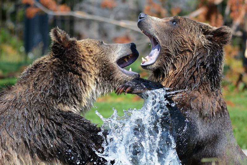 C'est officiel : le Bitcoin est maintenant dans le plus long bear market de son histoire